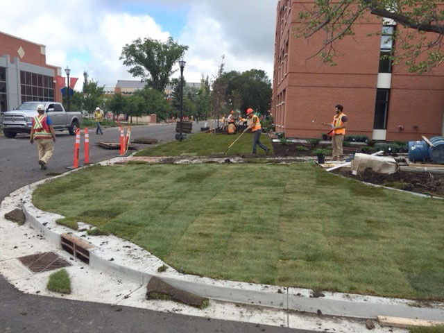 Laying Sod at a New Curb