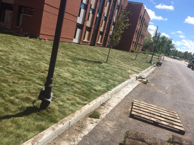 Newly Completed Commercial Landscaping